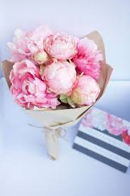 pianese flowers pink peonies flowers peony flowers and plants