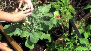 home fruit and vegetable garden youtube
