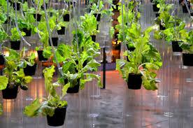 native san francisco plants live and eat your garden at san francisco flower u0026 garden show
