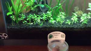 Aquascaping Plants Aquascaping For Beginners Plant And Layout Update Youtube