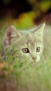 7014 best chats images on pinterest cats baby animals and crazy