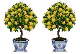 pair of lemon topiaries decorative wooden pieces