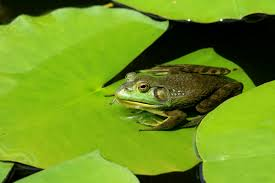 sitting on a lily pad dealing with change revela