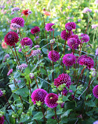 Summer Flowers For Garden - new cut flowers for your 2016 garden longfield gardens