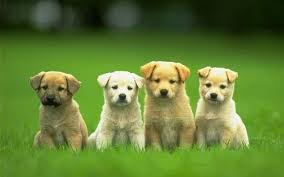 cute backgrounds for desktop dogs backgrounds collection 73