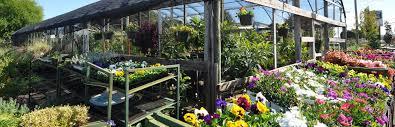 texas native plants landscaping hartwell u0027s nursery and landscape design denton county