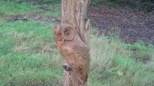 owl carving stolen in lochmaben border itv news