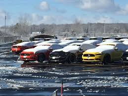 mustangs the rock hundreds of shelby gt350 mustangs are waiting for their stripes