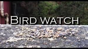 bird watch hd youtube