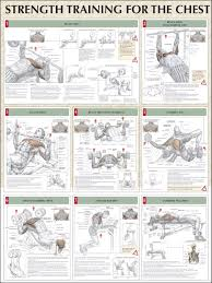 Bench Press Workout Routine Chart Ideal Exercise Routine