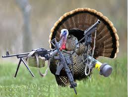 Happy Thanksgiving Funny Images 16 Best Funny Thanksgiving Images On Pinterest Funny