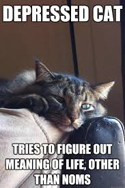 Memes About Depression - depression cat memes quickmeme