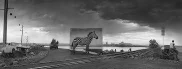 iconic animals u0027return u0027 to lands they once roamed u2013 proof