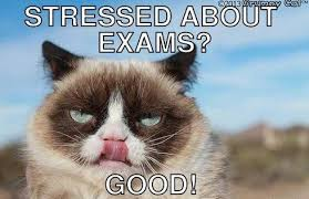 Good Grumpy Cat Meme - funny angry grumpy cat memes collection for friends family