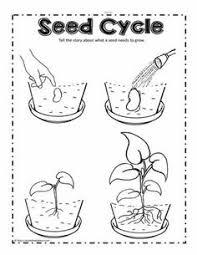make a flower cut u0026 color worksheet science plants pinterest
