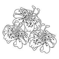 coloring page tigers tiger lily at lily coloring pages coloring pages for children