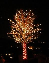 christmas lights tree wrap your most beautiful christmas tree lighting could be right outside