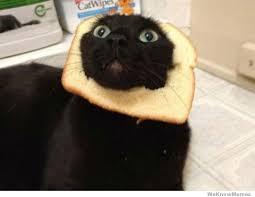 Meme Cats - breading cats meme weknowmemes
