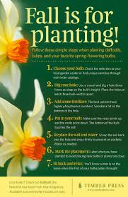 best 25 daffodil images ideas on pinterest draw flowers how to