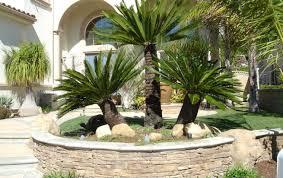 best house plants best indoor trees pin it best indoor trees house plants indoor