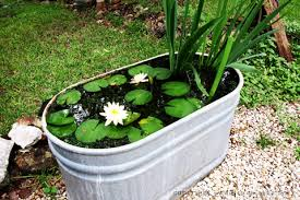 Fish For Backyard Ponds 10 Easy Steps To Create A Simple Backyard Pond With Children