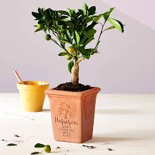 personalised family tree pot by letterfest notonthehighstreet