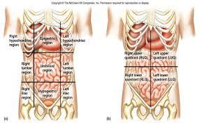 Anatomy Human Abdomen Left Lower Quadrant Anatomy Choice Image Learn Human Anatomy Image