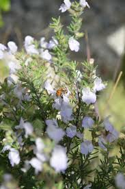 native drought tolerant plants 42 best florida wildflowers images on pinterest wildflowers