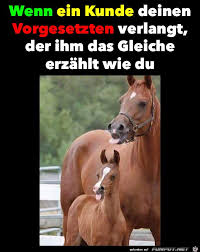 Das It Mane Meme - 23 best horses and unicorns 3 images on pinterest unicorns a
