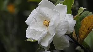 18 beautiful flowers you can easily grow in your garden worldweet