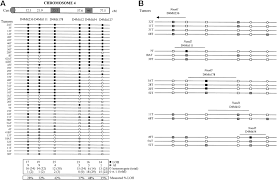 elevated frequency of loss of heterozygosity in mammary tumors