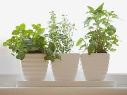 how to plant an indoor winter herb garden southern living