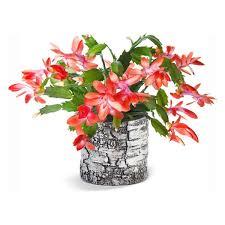 easy flowers to grow indoors 24 beautiful blooming houseplants