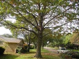 best tree cabling tree services tupelo ms