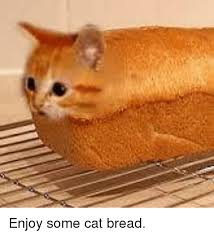 Cat In Bread Meme - enjoy some cat bread meme on me me