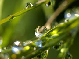drops wallpaper plants nature wallpapers in jpg format for