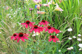 wildtype native plant nursery collections plantknot plantknot original gardening advice