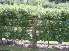 home orchard layout tips handy tips fruit trees and layout