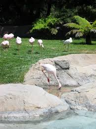 sundar narayanans travelog oakland zoo toddler tested dad