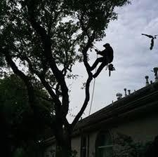 raised canopy and roof clearance joe s tree care