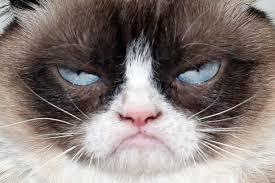 Grouchy Cat Meme - the world s grumpiest cat 40 funniest grumpy cat memes pics