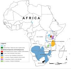 The Great Plains Map Saving The Great Migrations Declining Wildebeest In East Africa
