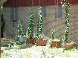 plant a beer garden i hops