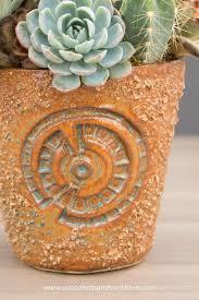 13 succulents that are native 1894 best cactus u0026 succulents images on pinterest plants