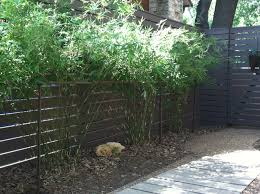 growing bamboo in a narrow space u2013 pros cons and a solution for