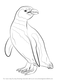 learn how to draw a magellanic penguin antarctic animals step by