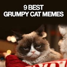 Good Grumpy Cat Meme - 9 best grumpy cat memes