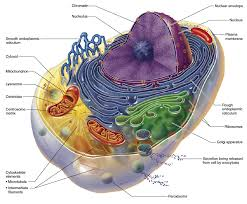 mitochondrial dysfunction nutrition and aging nutrition review