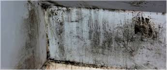 Black Mold On Concrete Basement Walls How To Remove Black And White Mould In Your Basement City Wide Group