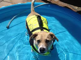 modern pool rafts for dogs dog toys pool toys home depot